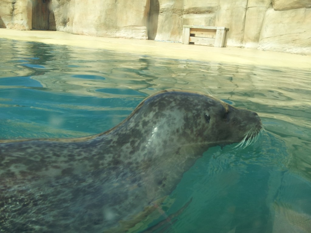 sea lion2